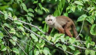 """Araguato Expeditions"" Tours | Catatumbo - Maracaibo Lake - Venezuela"