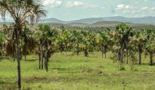 """""""Araguato Expeditions"""" Gran Sabana - Canaima National Park - Venezuela"""